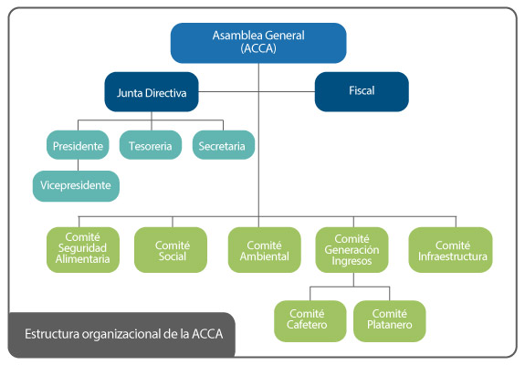Estructura organizacional de la ACCA